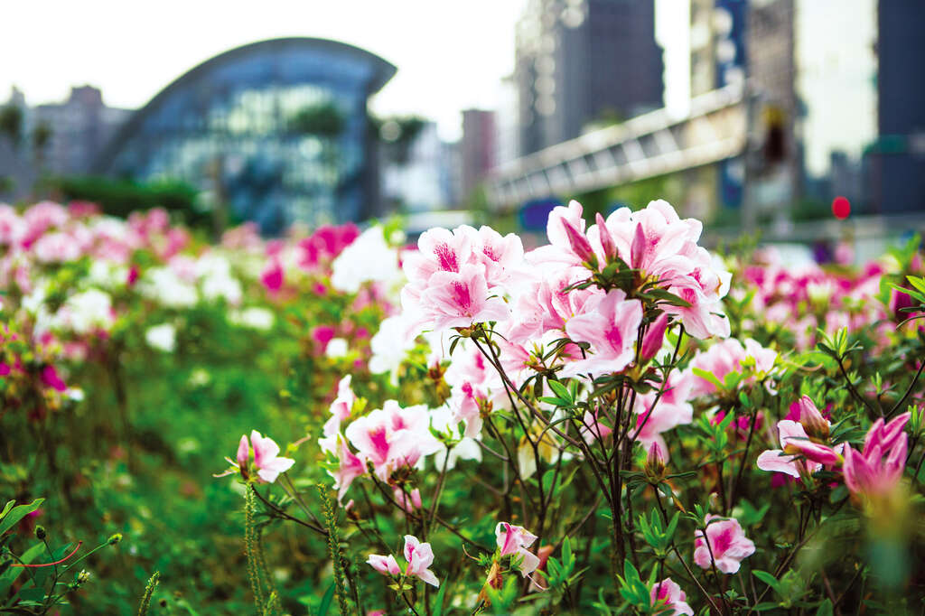 TAIPEI Spring 2020 Vol.19--Blossoming Flowers: The Must-See Taipei Flower Festivals