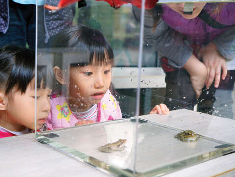Children can also learn about the creatures that live there by joining the branch's environmental education activities. (Photo/Nanmen Park Branch of National Taiwan Museum)